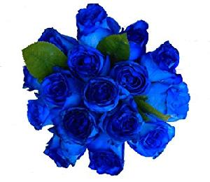 Fresh Cut Blue Rose Flowers