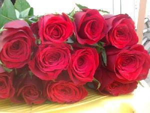 Fresh Dutch Rose Flowers