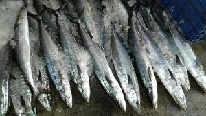 Frozen King Fish Steak