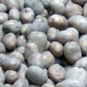 Fresh White Potato