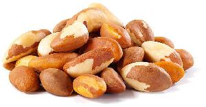 UAE Brazil Nut,Brazil Nut from Arabic Manufacturers and ...