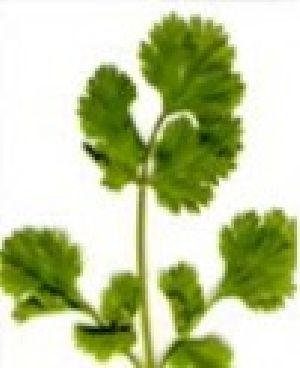Coriander Fruit
