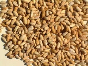 Dried Neem Seeds