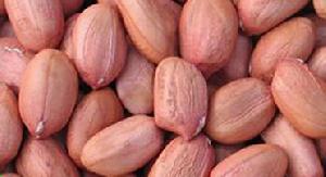 Bold Peanut Kernels