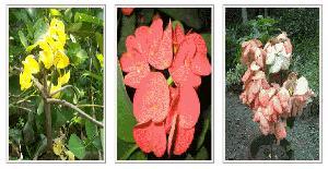 Flower Plants