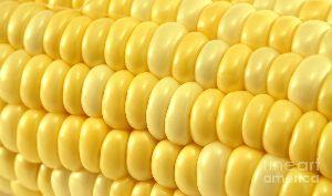 Yallow Corn