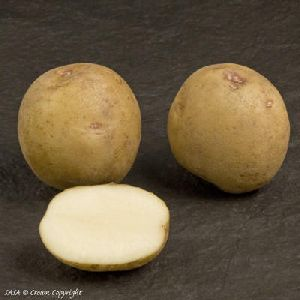 Fresh Atlantic Potato