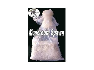 Oyster Mushroom Spawn in Madhya Pradesh - Manufacturers and