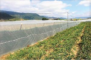 Aquaculture Nets