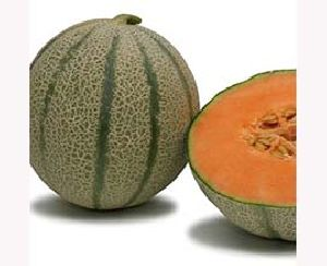 Fresh Galia Melon