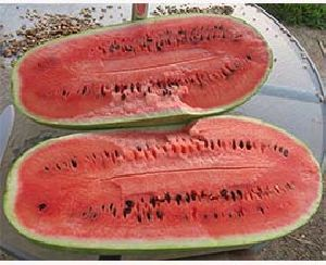 Watermelon long