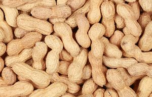 Bold Shelled Groundnuts