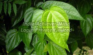 Tendu Leaves