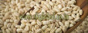 Barley Grains