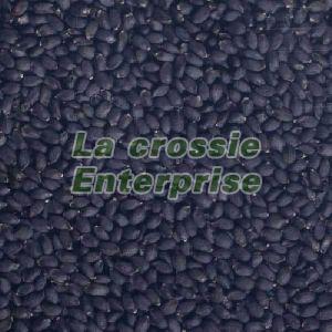 Basil Bio Organic Seeds