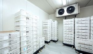 Commercial Cold Storage Rental Services