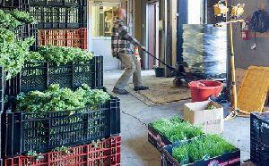 Vegetable Warehouse Rental Services