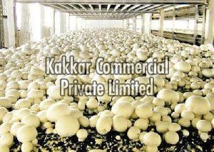 Mushroom Cold Storage Rental Services