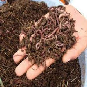 Agricultural Vermicompost