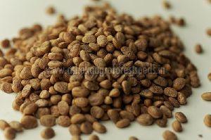 Buchanania Lanzan Seeds