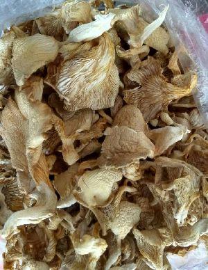 Sajorkaju Oyster Mushroom