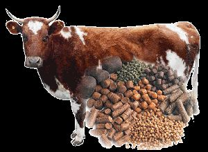 Cattle Feed 02