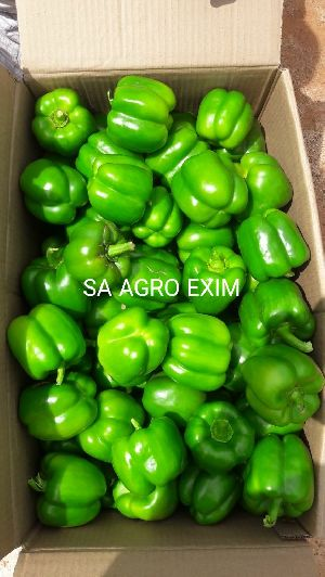 INDIAN GREEN CAPSICUM