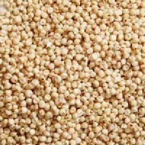 Jowar Grain