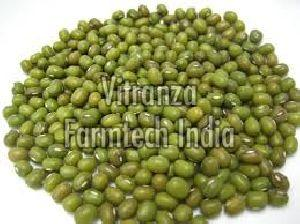 Organic Whole Moong Dal