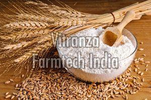 Organic Mp Wheat Flour