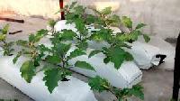 Coir Peat Grow Bags