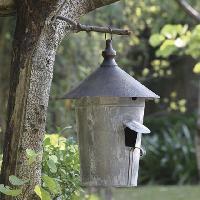 Iron Bird House