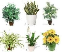 Outdoor Plants