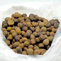 Tea Seeds