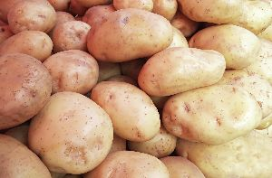 Chip Grade Potato