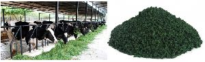 Spirulina Cattle Feed