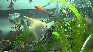 Spirulina Fish Food