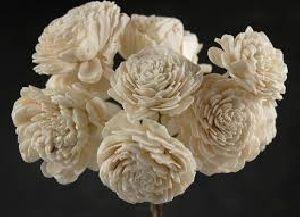 Fresh Sola Flowers