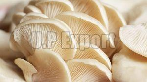 Fresh Oyster Mushroom