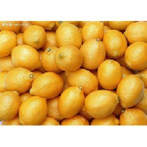 Egyptian Fresh Lemon