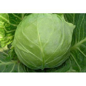 Fresh Egyptian Cabbage