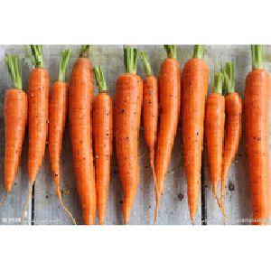 Fresh Egyptian Carrots