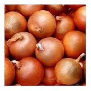 samber onion 5 to 25 mm