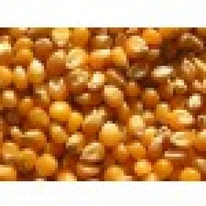 Dried Corn Kernels