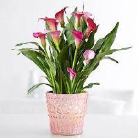 Flowers Plant
