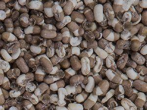 Moth Bean