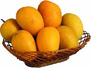 Alphonso Mango 02