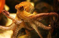 Frozen Octopus
