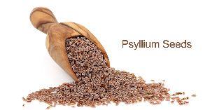 Psyllium Seeds (isabgol)