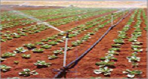 Drip N Drip Sprinkler Irrigation System